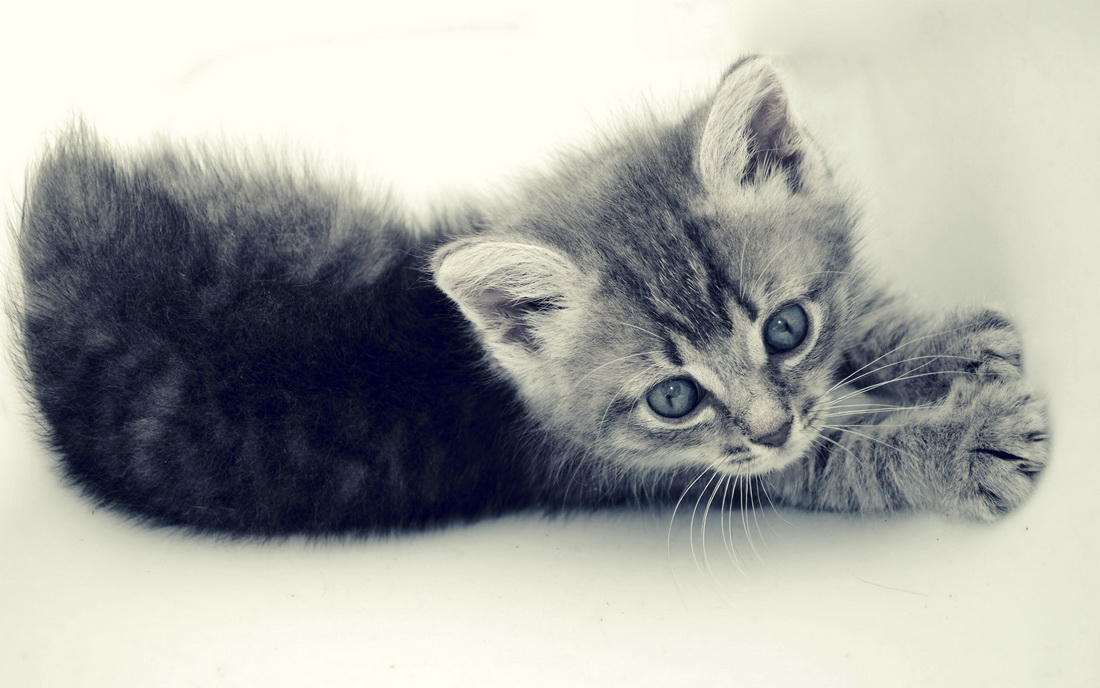 Свежая подборка фотографий для любителей кошек