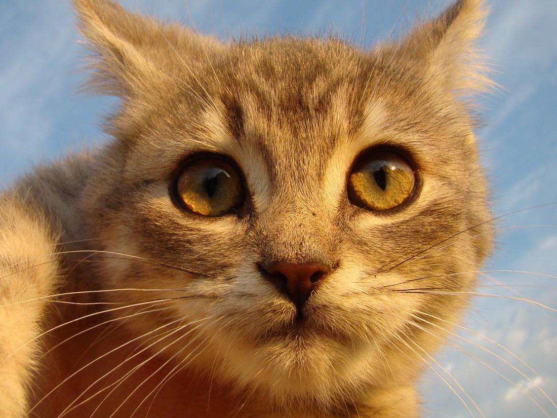 подборка фотографий для любителей кошек