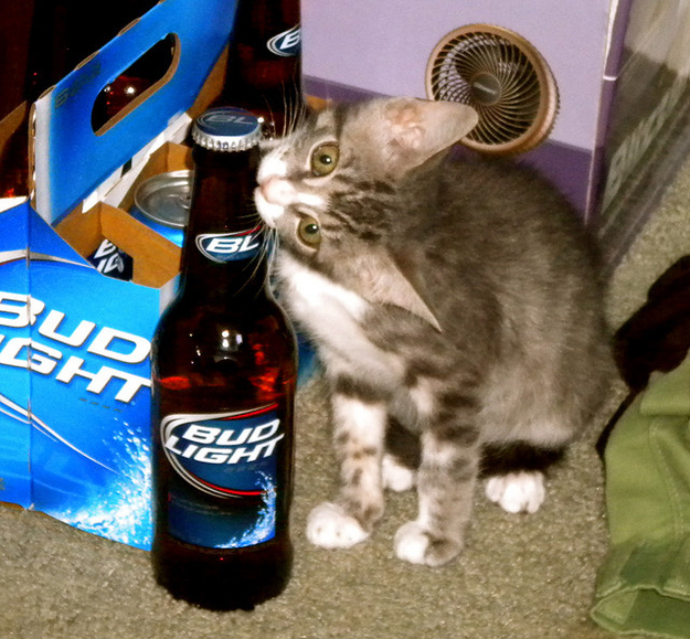 Пиво и кошки