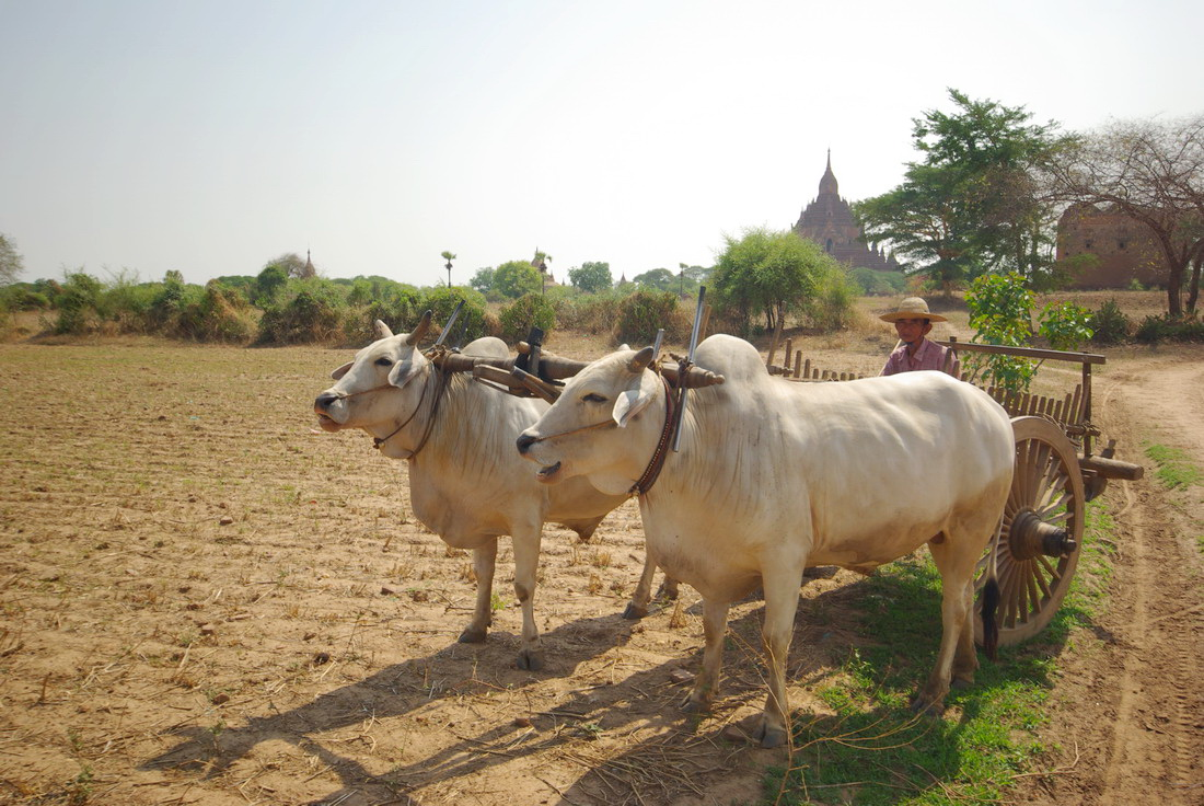 Бирма - Паган