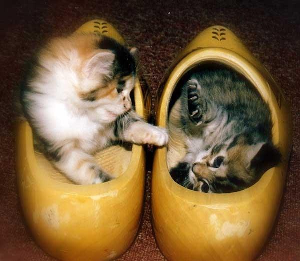 Кошки и обувь