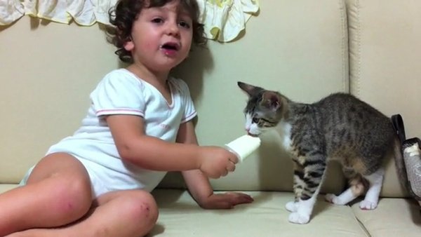 Кошки и мороженное