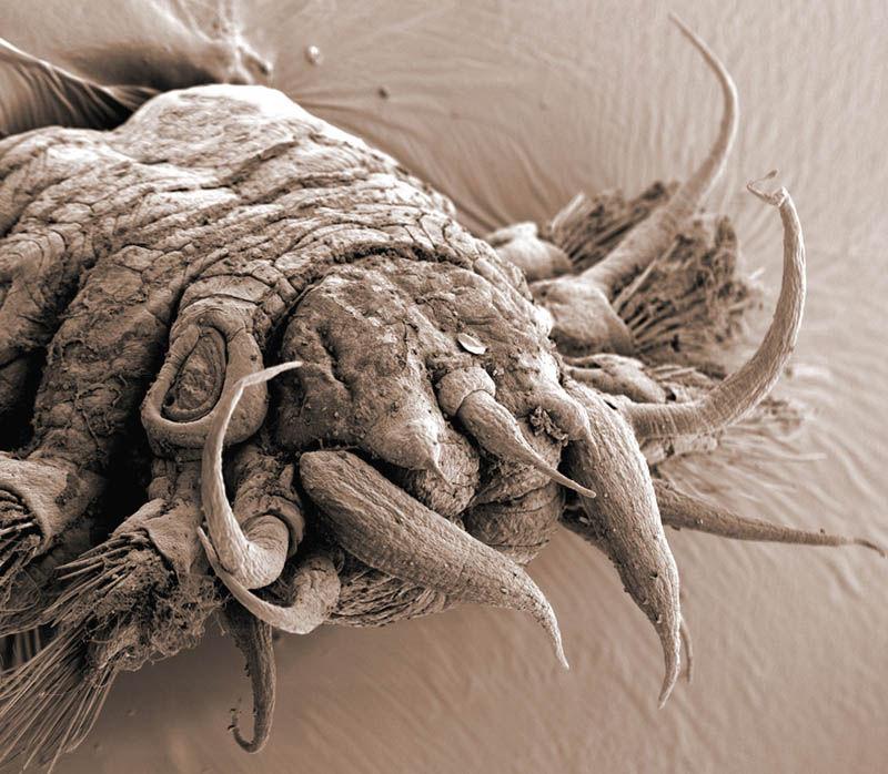 Мир под Электронным микроскопом