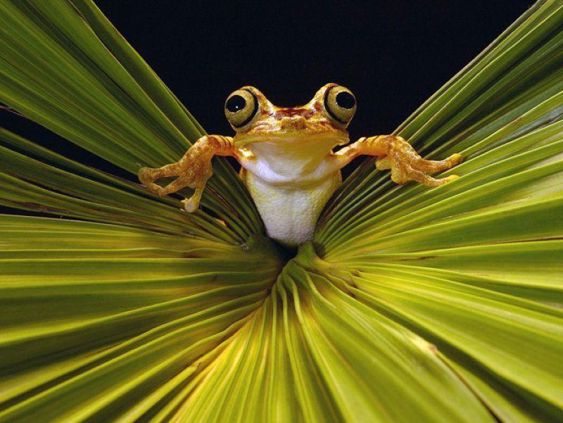 забавные фотографии животных