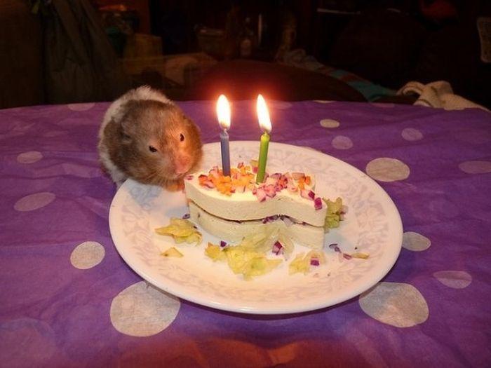Животные устраивающие Вечеринки