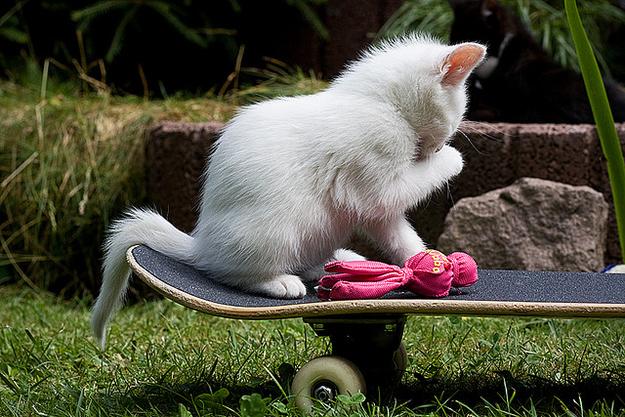 Катающиеся на скейтборде Животные