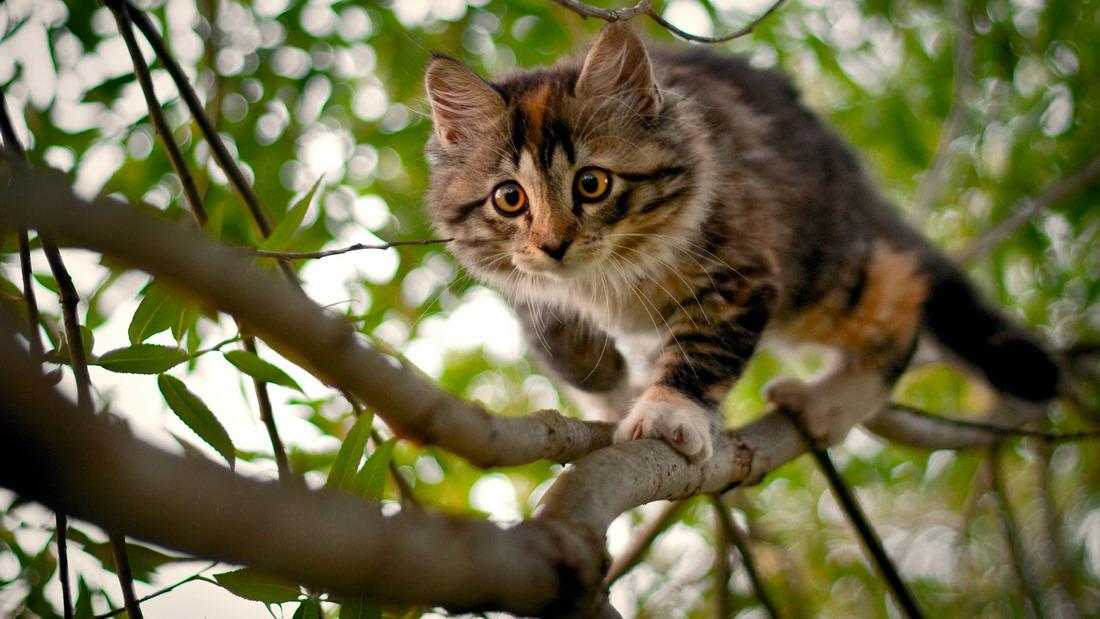 фото кошек
