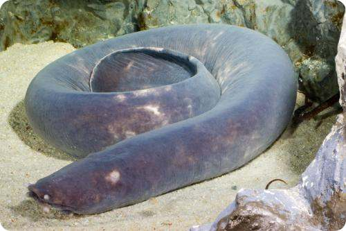 THE HAGFISH Do Your Kids Know This A   amazoncom
