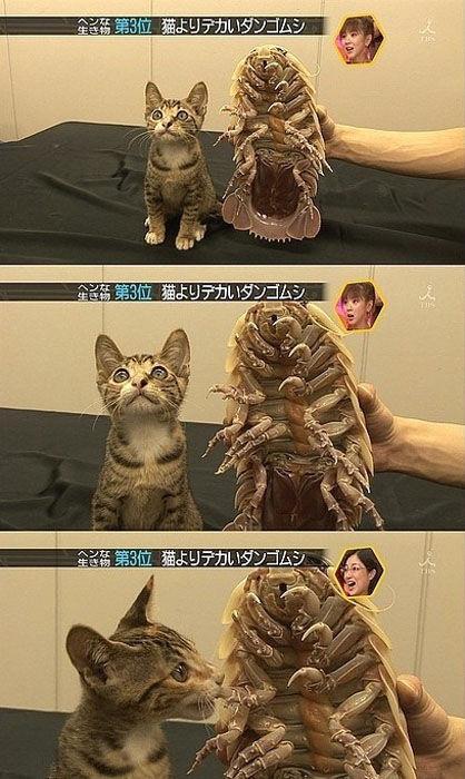 Очень Веселая фотоподборка с Кошками