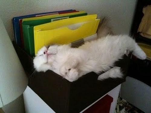 50 Позиций для сна Кошки
