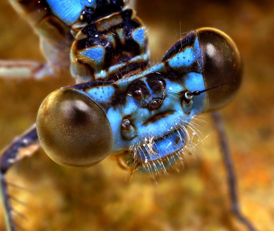 Микрокосмос фотографа Томаса Шахана