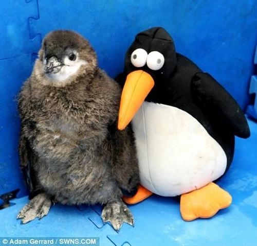 Животные и их двойники