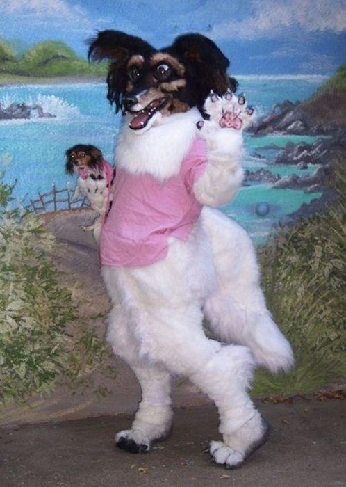Странные и необычные фото с собаками