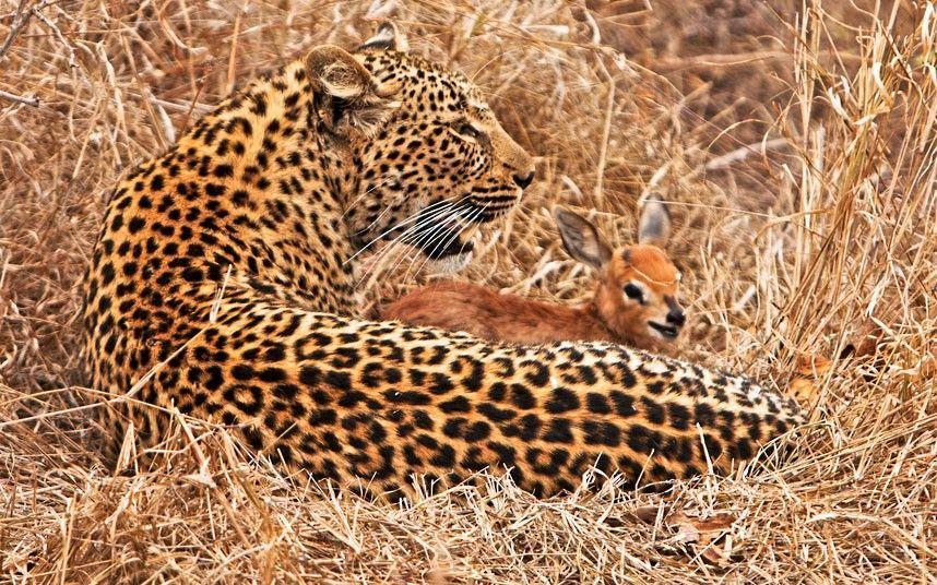 весёлые фотографии животных