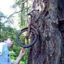 Деревья, Которые Пожирают Все Вокруг