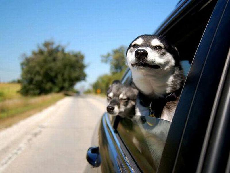 Забавные Морды Собак