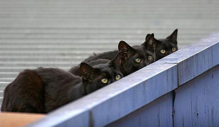 Вы не спрячетесь от нас