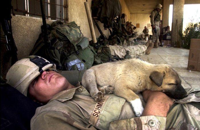 Война и Животные