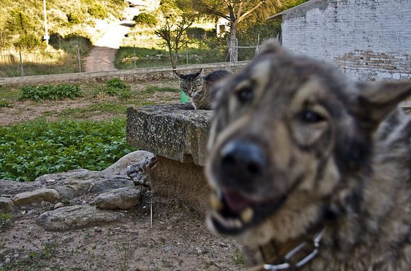 Фотобомбы у Животных