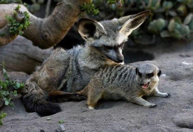 Забавные Парочки Животных