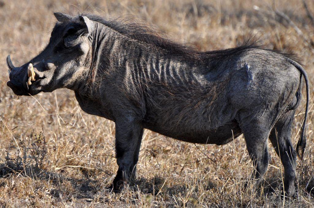 Самые некрасивые животные мира