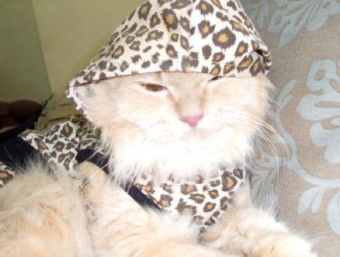 Кошки и котята в капюшонах