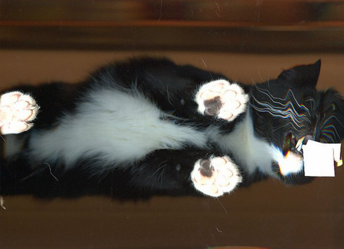 Сканированные коты