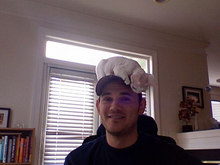 Кошки как Шляпы