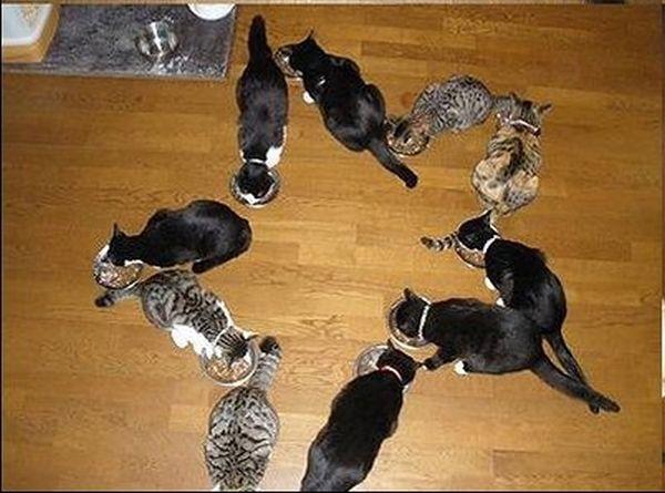 Кошачья геометрия