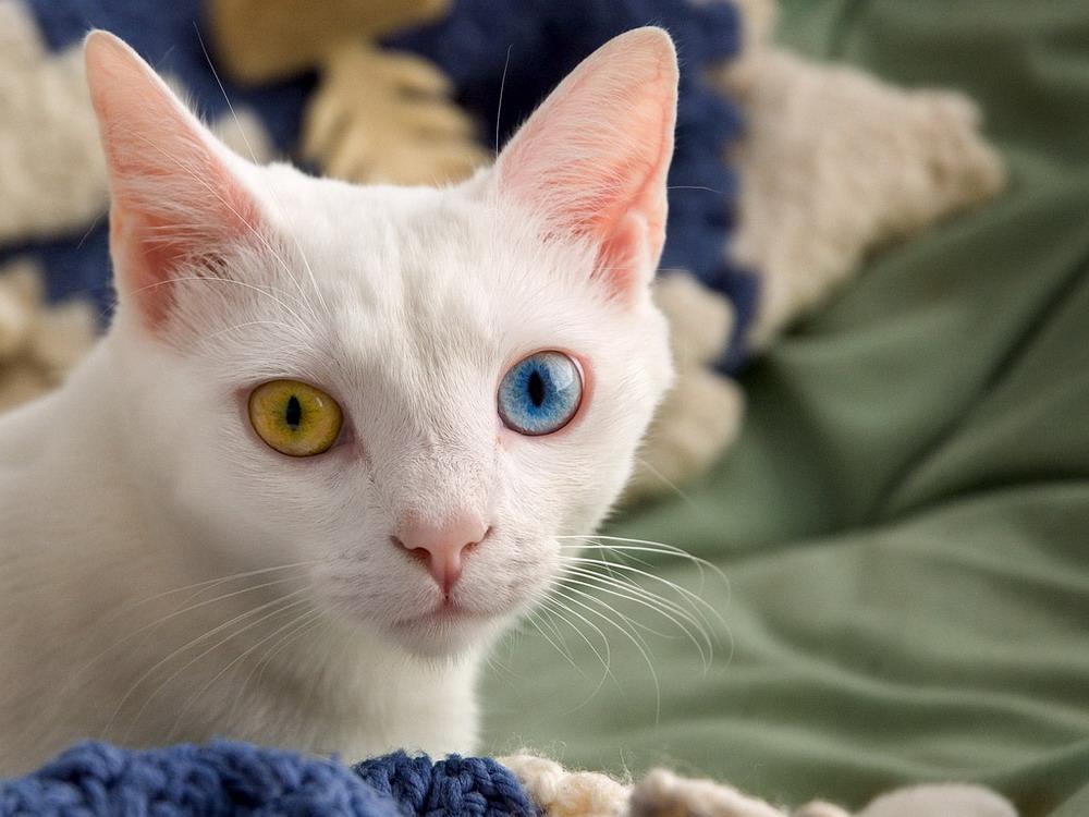 Животные с разным цветом глаз