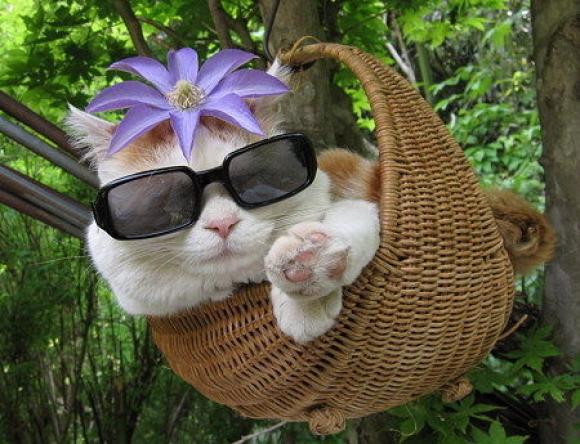 Кошки и собаки в очках