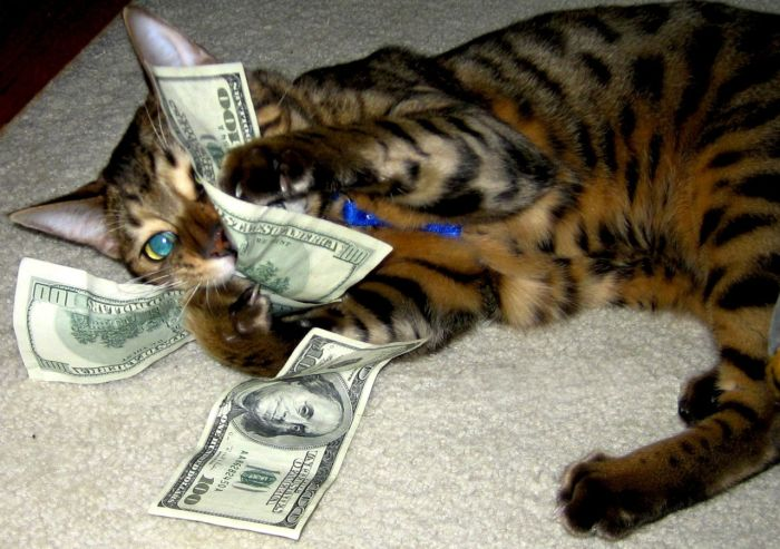 Кошкины деньги