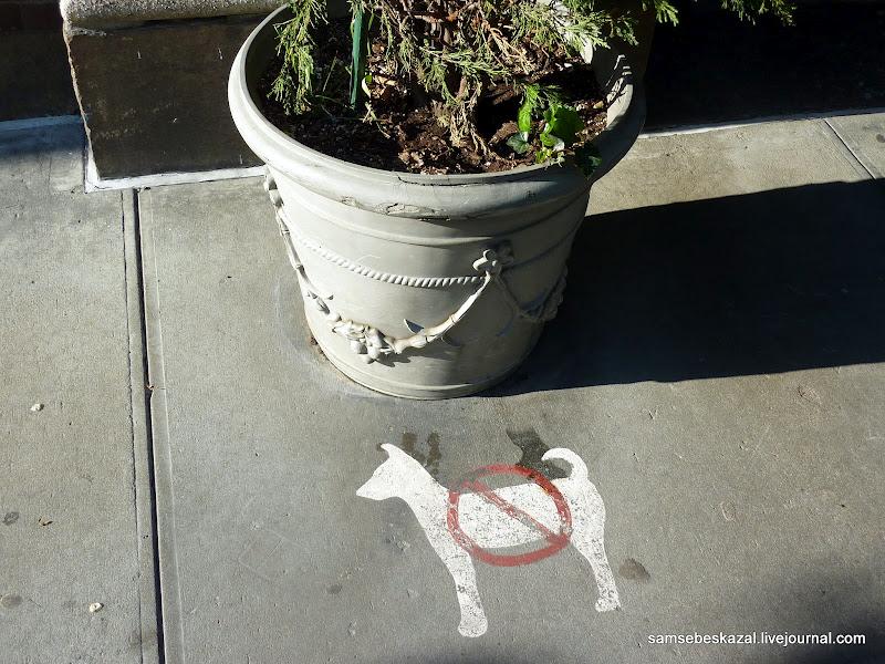 Дизайн и собачьи какашки