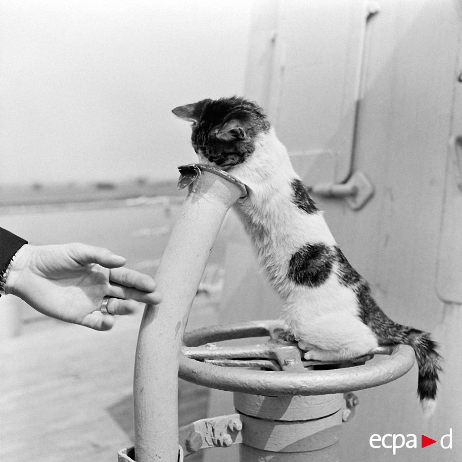 Коты на войне