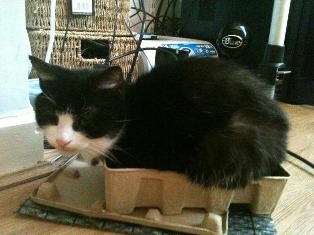Лучшие Места для отдыха Кошки