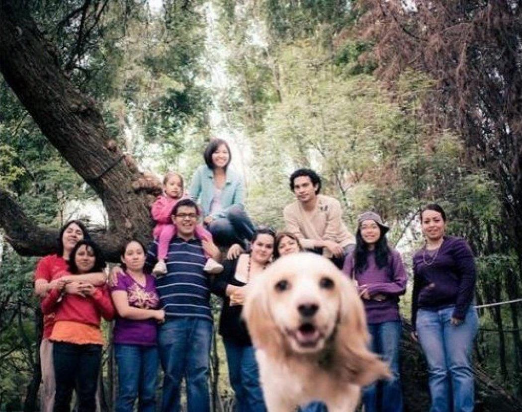 Мега Коллекция Фотобомб с Животными