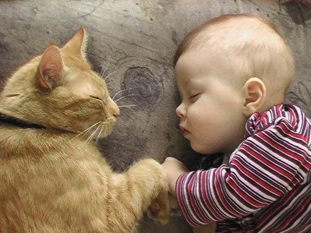 Младенцы и Кошки