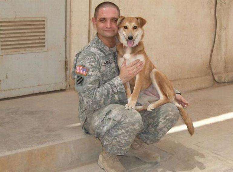 Преданные собаки на службе армии