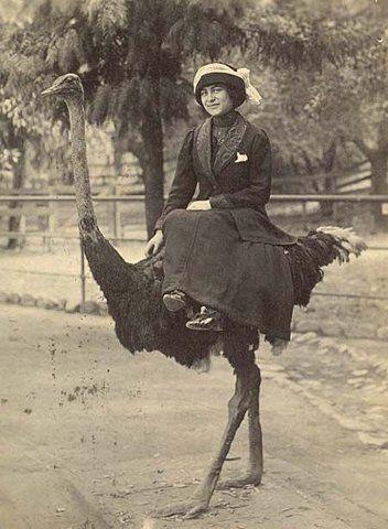 Забавные Винтажные фотографии животных