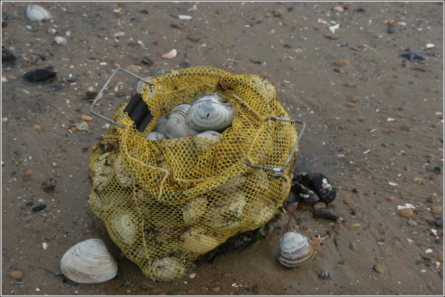 Тонны деликатесов на пляжах Владивостока