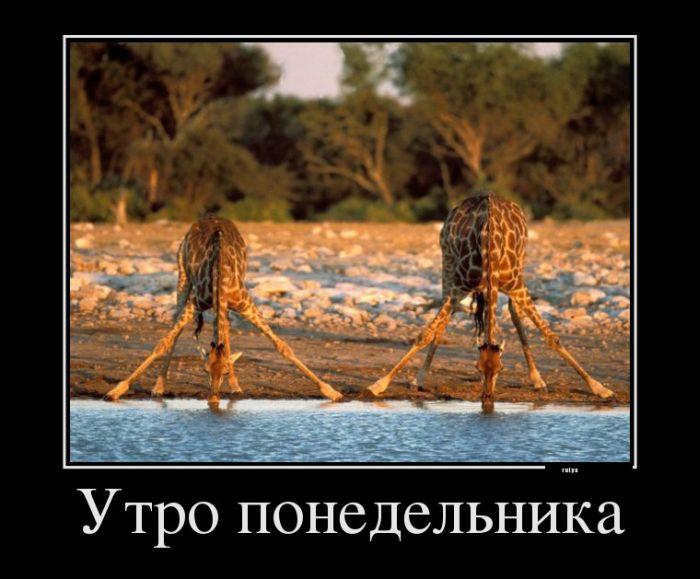 Демотиваторы с зверушками