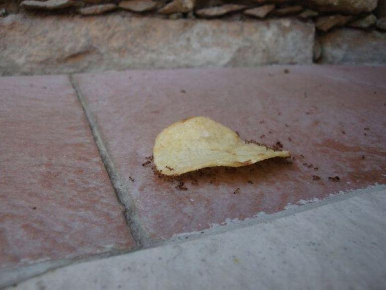 Муравьи переносят чипсы вверх по стене
