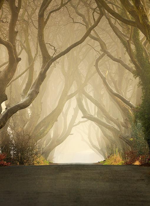 Удивительный Туннель в Северной Ирландии