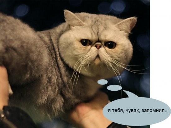 О чем на самом деле думают коты на выставках