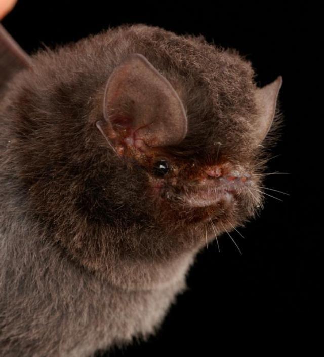 Летучие мыши с непривычного ракурса
