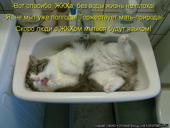 Лучшие котоматрицы