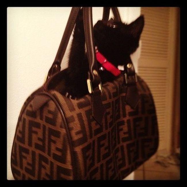 Богатые Кошки c Instagram