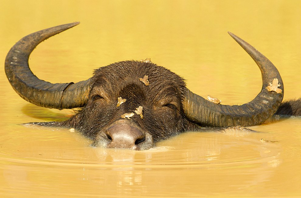 Конкурс фотографии National Geographic 2012