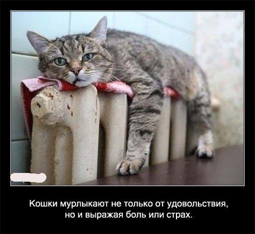 Факты про кошек
