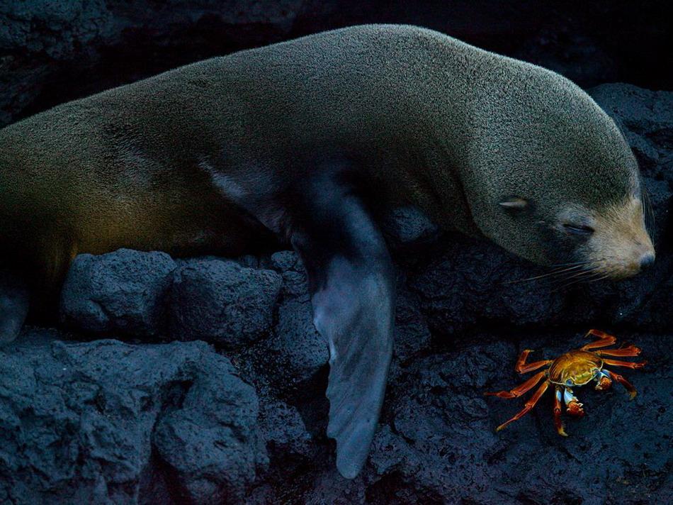 Лучшие фотографии National Geographic в сентябре
